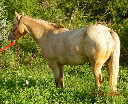 horses for sale in ontario. Home middot; Horses For Sale